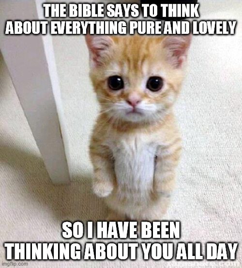 Cute Cat |  THE BIBLE SAYS TO THINK ABOUT EVERYTHING PURE AND LOVELY; SO I HAVE BEEN THINKING ABOUT YOU ALL DAY | image tagged in memes,cute cat | made w/ Imgflip meme maker
