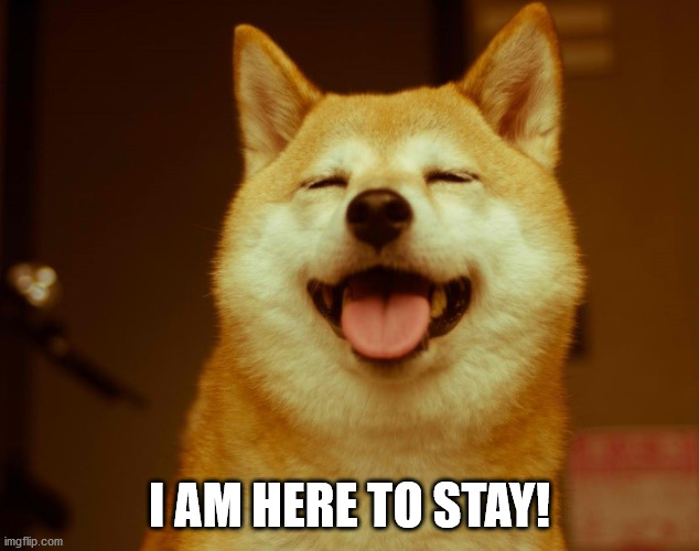 I AM HERE TO STAY! | image tagged in happy doge | made w/ Imgflip meme maker