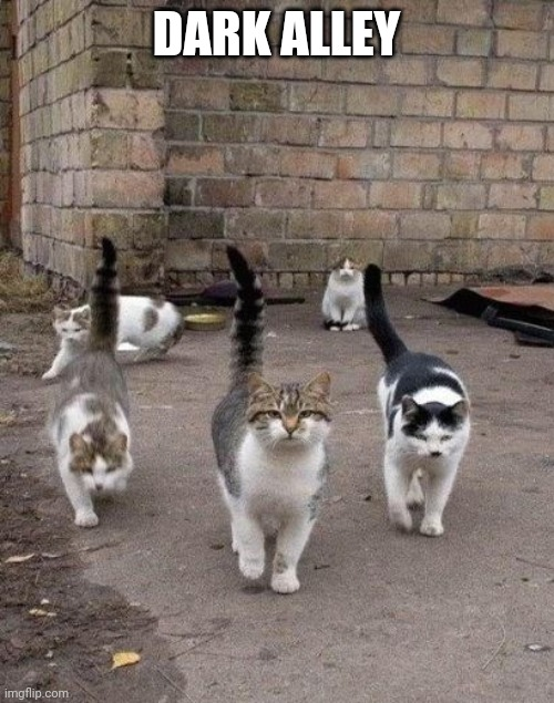 Alley Cats |  DARK ALLEY | image tagged in alley cats | made w/ Imgflip meme maker