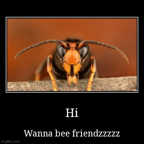 Hi | Wanna bee friendzzzzz | image tagged in funny,demotivationals | made w/ Imgflip demotivational maker