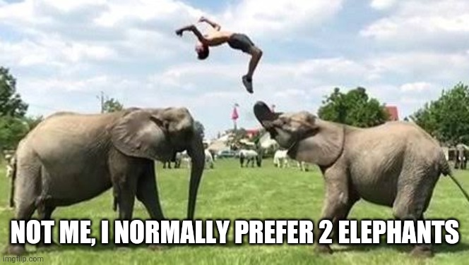 NOT ME, I NORMALLY PREFER 2 ELEPHANTS | made w/ Imgflip meme maker
