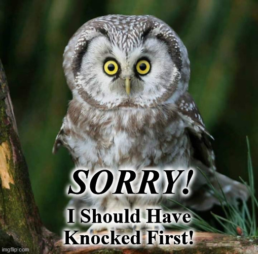 owl |  SORRY! I Should Have Knocked First! | image tagged in owl | made w/ Imgflip meme maker