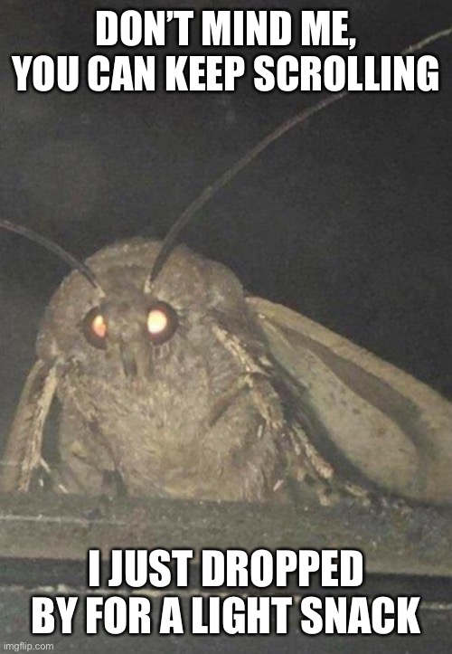 Mememoth |  DON'T MIND ME, YOU CAN KEEP SCROLLING; I JUST DROPPED BY FOR A LIGHT SNACK | image tagged in moth,memes | made w/ Imgflip meme maker