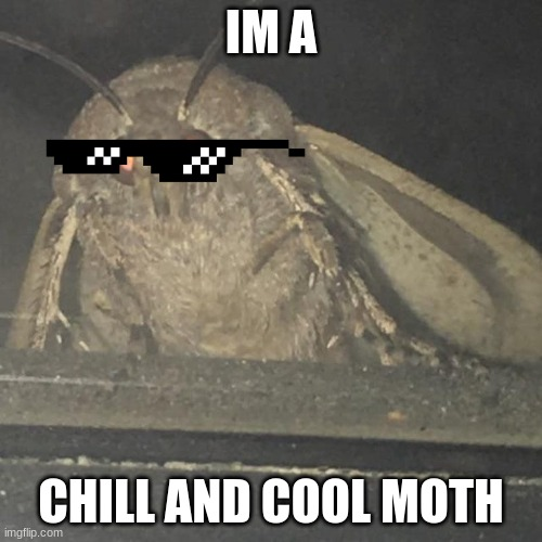 cool and chill moth |  IM A; CHILL AND COOL MOTH | image tagged in moth lamp | made w/ Imgflip meme maker