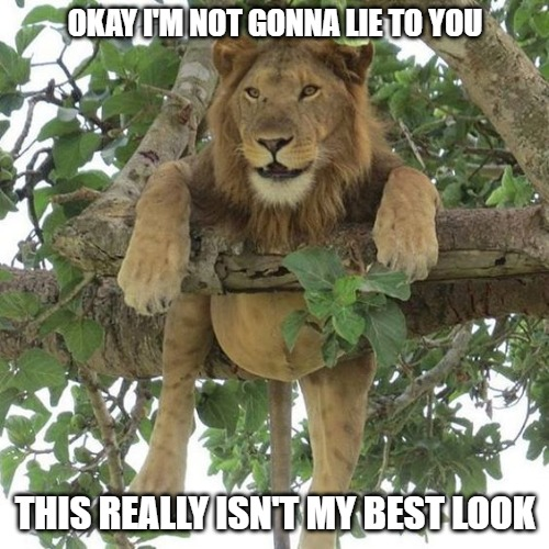 Everyone has a bad day |  OKAY I'M NOT GONNA LIE TO YOU; THIS REALLY ISN'T MY BEST LOOK | image tagged in cats,lions,memes,fun,funny,funny memes | made w/ Imgflip meme maker