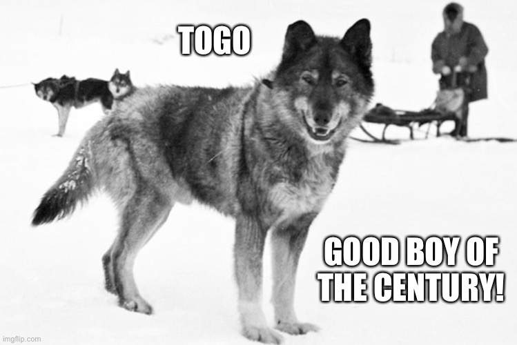 Togo! |  TOGO; GOOD BOY OF THE CENTURY! | image tagged in togo,good boy,saviour of children,chaser of caribou | made w/ Imgflip meme maker