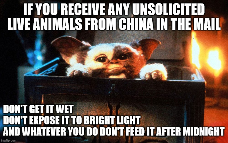unsolicited animals |  IF YOU RECEIVE ANY UNSOLICITED LIVE ANIMALS FROM CHINA IN THE MAIL; DON'T GET IT WET DON'T EXPOSE IT TO BRIGHT LIGHT AND WHATEVER YOU DO DON'T FEED IT AFTER MIDNIGHT | image tagged in unsolicited,china,seeds,gremlins | made w/ Imgflip meme maker