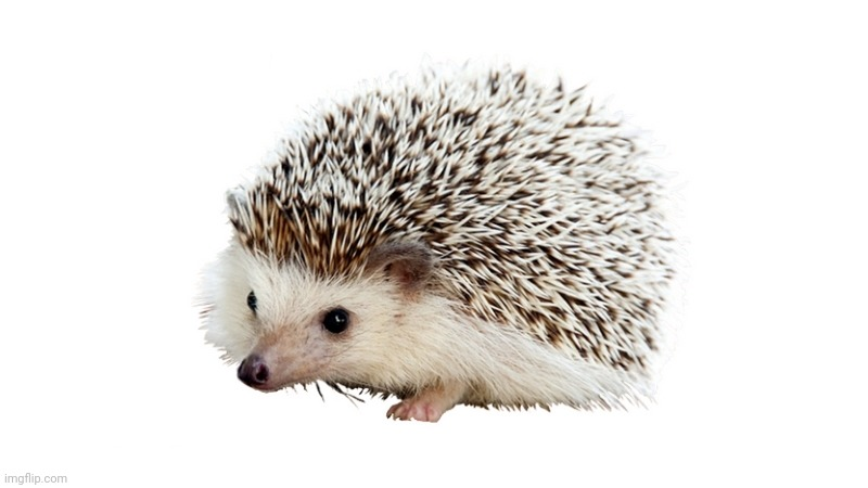 carl the hedgehog | image tagged in carl the hedgehog | made w/ Imgflip meme maker