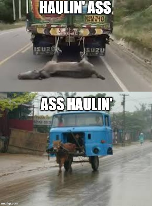 HAULIN' ASS; ASS HAULIN' | image tagged in funny,memes,funny memes,trucks,donkeys,fun | made w/ Imgflip meme maker