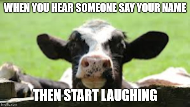 ah school |  WHEN YOU HEAR SOMEONE SAY YOUR NAME; THEN START LAUGHING | image tagged in cow,name,school meme,cows | made w/ Imgflip meme maker