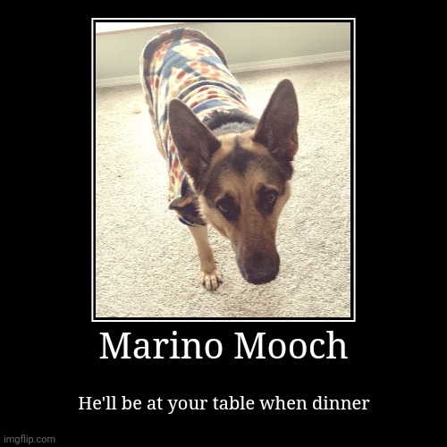 Marino Mooch Poster | Marino Mooch | He'll be at your table when dinner | image tagged in funny,demotivationals,mooch,marino mooch,german shepherd,dinner | made w/ Imgflip demotivational maker