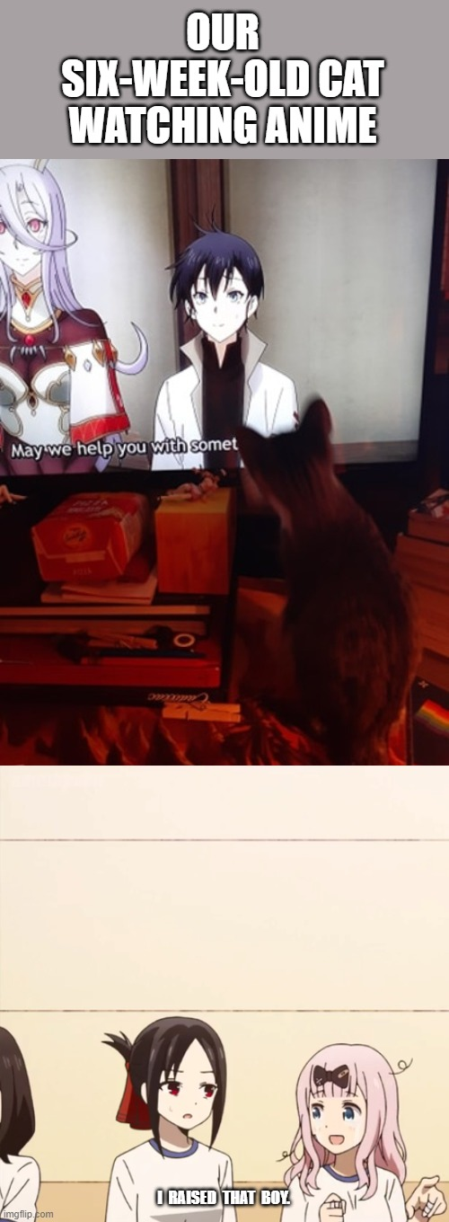 I Raised That Boy |  OUR SIX-WEEK-OLD CAT WATCHING ANIME; I  RAISED  THAT  BOY. | image tagged in i raised that boy,memes,cats,anime meme | made w/ Imgflip meme maker