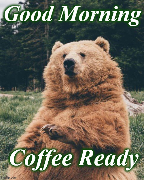 Good Morning; Coffee Ready | image tagged in bear | made w/ Imgflip meme maker