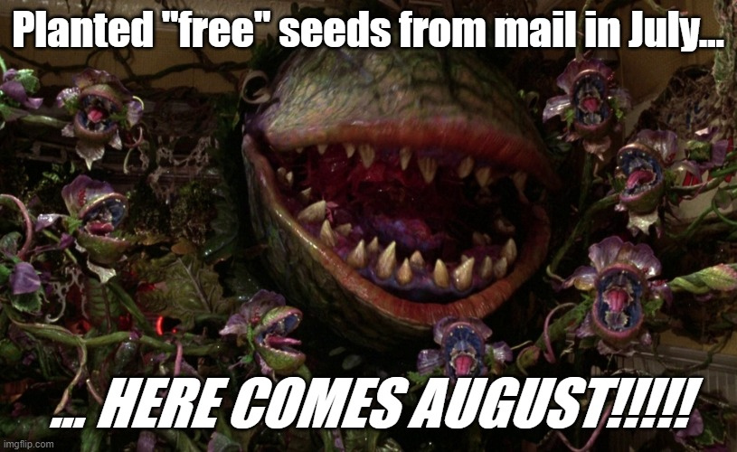 "China Mystery Seeds - July 2020 |  Planted ""free"" seeds from mail in July... ... HERE COMES AUGUST!!!!! 