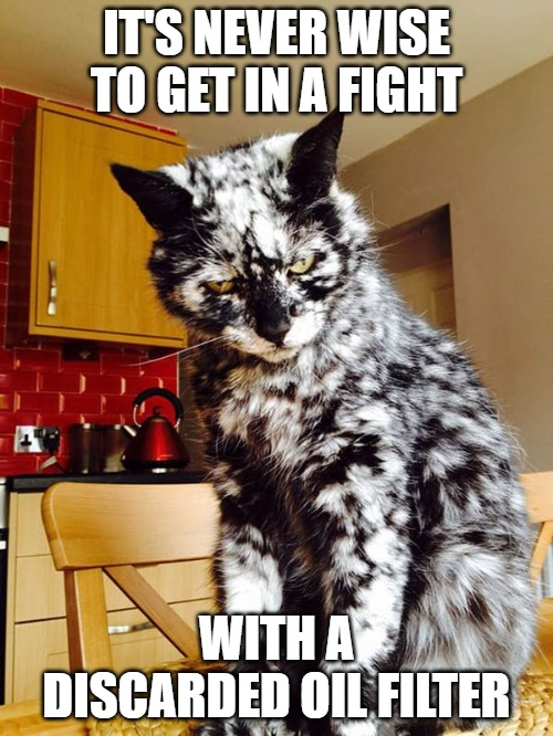 Playing silly games |  IT'S NEVER WISE TO GET IN A FIGHT; WITH A DISCARDED OIL FILTER | image tagged in cats,memes,fun,funny memes,funny,fights | made w/ Imgflip meme maker
