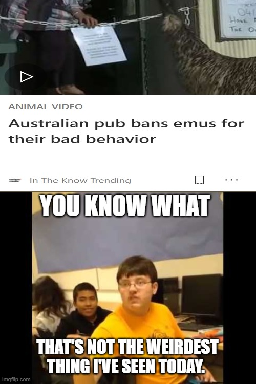 Read the tags |  YOU KNOW WHAT; THAT'S NOT THE WEIRDEST THING I'VE SEEN TODAY. | image tagged in you know what i'm about to say it,australia,bans,emus,from,pubs | made w/ Imgflip meme maker