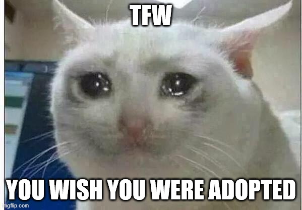 crying cat | TFW YOU WISH YOU WERE ADOPTED | image tagged in crying cat | made w/ Imgflip meme maker