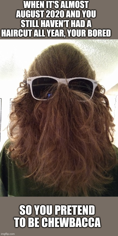 this is what I do with my life now |  WHEN IT'S ALMOST AUGUST 2020 AND YOU STILL HAVEN'T HAD A HAIRCUT ALL YEAR, YOUR BORED; SO YOU PRETEND TO BE CHEWBACCA | image tagged in star wars,chewbacca,quarantine,coronavirus | made w/ Imgflip meme maker