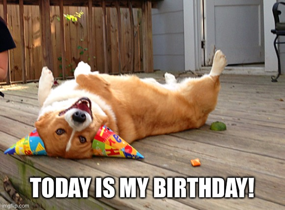 Today (as of July 31st) is my birthday! |  TODAY IS MY BIRTHDAY! | image tagged in birthday corgi,birthday | made w/ Imgflip meme maker