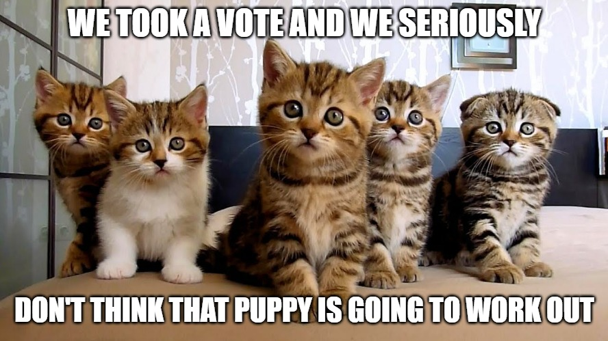 Let's be democratic about this |  WE TOOK A VOTE AND WE SERIOUSLY; DON'T THINK THAT PUPPY IS GOING TO WORK OUT | image tagged in cats memes,fun,funny,funny memes,cats,puppy | made w/ Imgflip meme maker