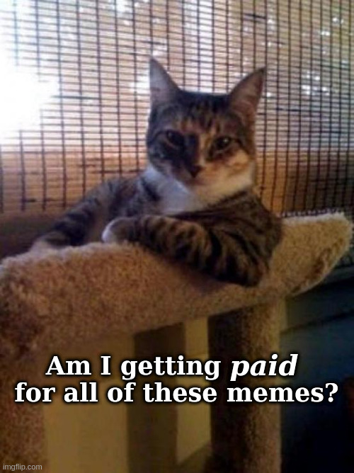 Capitalist Cat |  Am I getting           for all of these memes? paid | image tagged in memes,cat,pay,capitalism | made w/ Imgflip meme maker