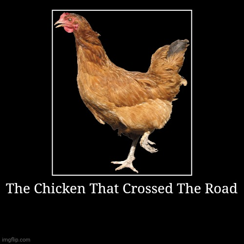 The Chicken That Crossed The Road | | image tagged in funny,demotivationals,chicken,why did the chicken cross the road | made w/ Imgflip demotivational maker
