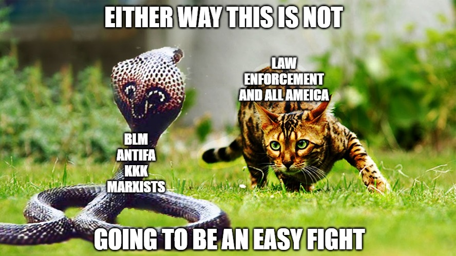 Don't give up the fight |  EITHER WAY THIS IS NOT; LAW ENFORCEMENT AND ALL AMEICA; BLM ANTIFA KKK MARXISTS; GOING TO BE AN EASY FIGHT | image tagged in cats,memes,fun,funny,snakes,2020 | made w/ Imgflip meme maker