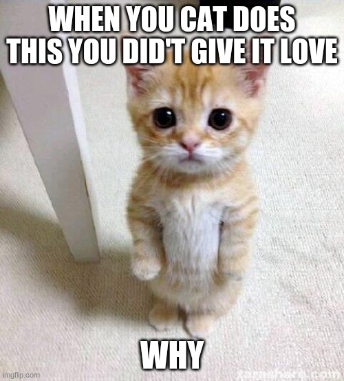 Cute Cat Meme |  WHEN YOU CAT DOES THIS YOU DID'T GIVE IT LOVE; WHY | image tagged in memes,cute cat | made w/ Imgflip meme maker
