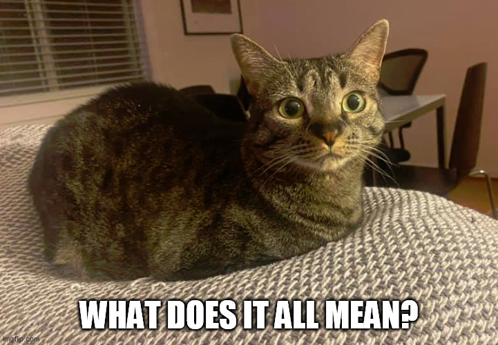 emo kitteh |  WHAT DOES IT ALL MEAN? | image tagged in emo,cat,emotions,sad,pondering | made w/ Imgflip meme maker