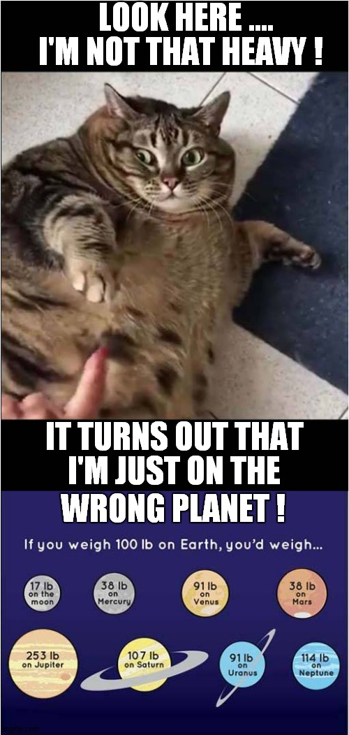 Another Cat Another Planet |  LOOK HERE .... I'M NOT THAT HEAVY ! IT TURNS OUT THAT; I'M JUST ON THE; WRONG PLANET ! | image tagged in fun,cats,fat cat,gravity,planets | made w/ Imgflip meme maker