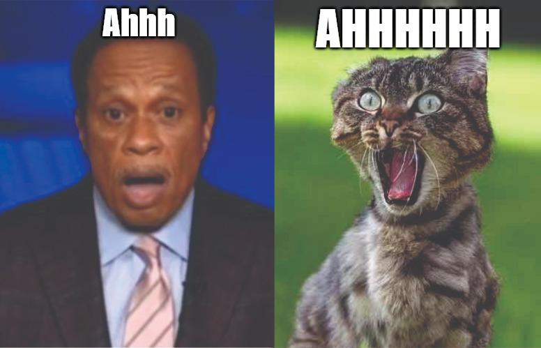 Ahhh |  AHHHHHH; Ahhh | image tagged in cats,juan williams,memes,fun,funny,2020 | made w/ Imgflip meme maker