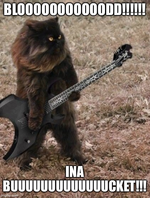 Death Metal Cat | BLOOOOOOOOOOODD!!!!!! INA BUUUUUUUUUUUUUCKET!!! | image tagged in death metal cat | made w/ Imgflip meme maker