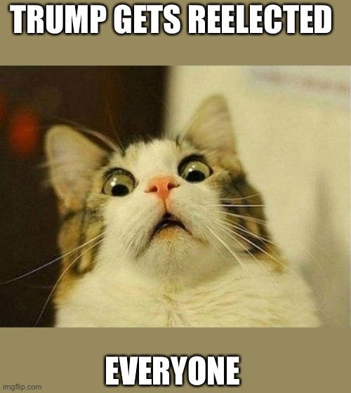 Scared Cat |  TRUMP GETS REELECTED; EVERYONE | image tagged in memes,scared cat | made w/ Imgflip meme maker