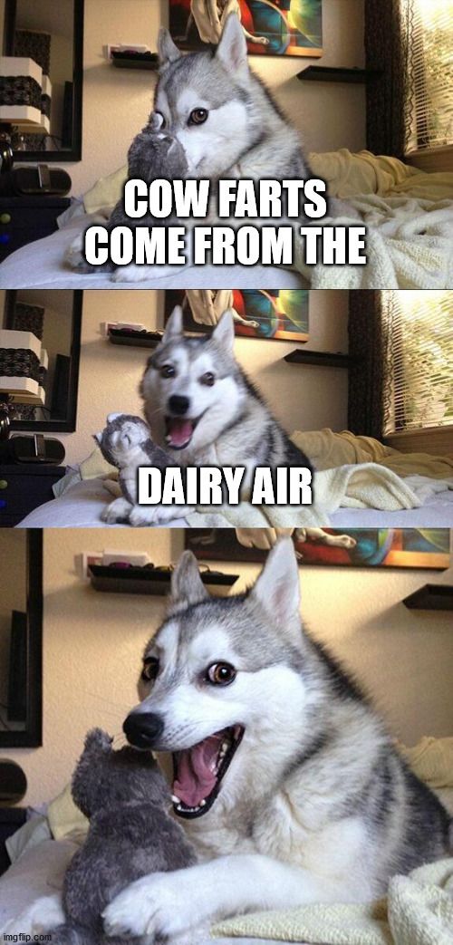 Bad Pun Dog |  COW FARTS COME FROM THE; DAIRY AIR | image tagged in memes,bad pun dog | made w/ Imgflip meme maker