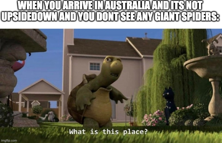Wait what? |  WHEN YOU ARRIVE IN AUSTRALIA AND ITS NOT UPSIDEDOWN AND YOU DONT SEE ANY GIANT SPIDERS: | image tagged in what is this place,australia,australians,turtle,funny,memes | made w/ Imgflip meme maker