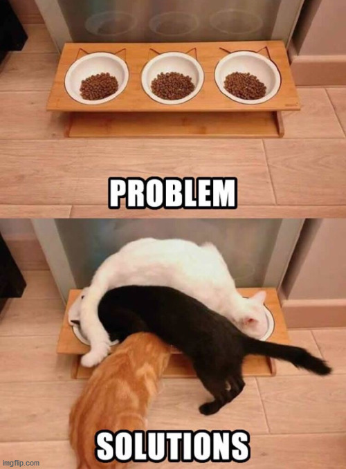 Cat's can figure it out. | image tagged in cats,problems,solution | made w/ Imgflip meme maker