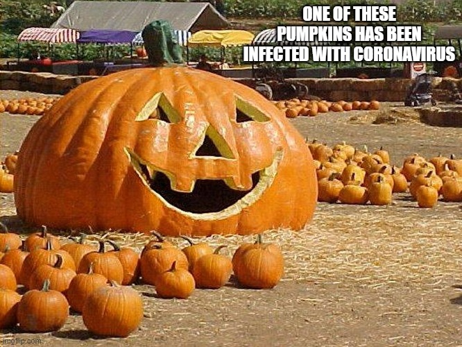 ONE OF THESE PUMPKINS HAS BEEN INFECTED WITH CORONAVIRUS | image tagged in too funny | made w/ Imgflip meme maker