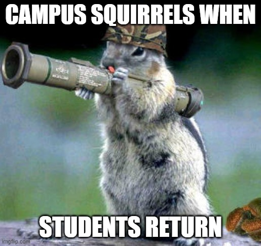 Rodent radicals |  CAMPUS SQUIRRELS WHEN; STUDENTS RETURN | image tagged in memes,bazooka squirrel | made w/ Imgflip meme maker