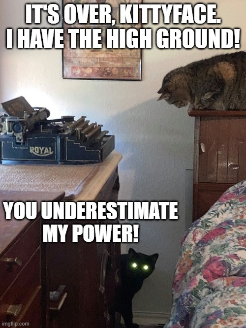 KITTY WARS |  IT'S OVER, KITTYFACE. I HAVE THE HIGH GROUND! YOU UNDERESTIMATE MY POWER! | image tagged in funny cats,star wars,sci-fi,anakin skywalker | made w/ Imgflip meme maker