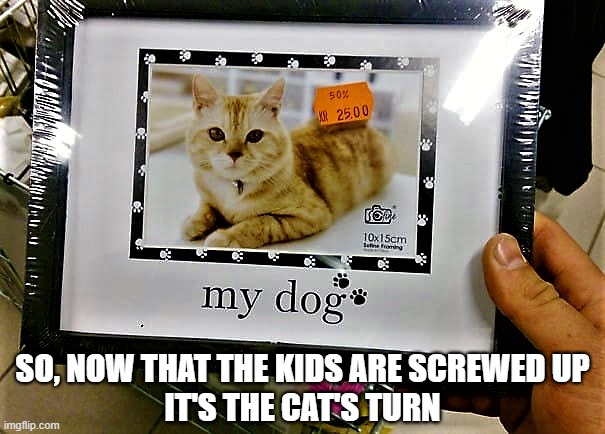 picture frame with cat as my dog |  SO, NOW THAT THE KIDS ARE SCREWED UP IT'S THE CAT'S TURN | image tagged in animal meme,cat meme,dog meme,dog vs cat,lgbtq,gender identity | made w/ Imgflip meme maker