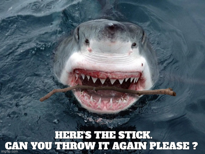 image tagged in shark,dog,ocean,fetch,stick,pets | made w/ Imgflip meme maker