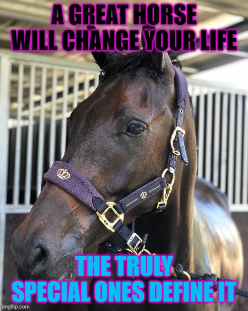 Horse quote |  A GREAT HORSE WILL CHANGE YOUR LIFE; THE TRULY SPECIAL ONES DEFINE IT | image tagged in cute animals,animals | made w/ Imgflip meme maker