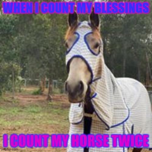 horse quote |  WHEN I COUNT MY BLESSINGS; I COUNT MY HORSE TWICE | image tagged in cute animals,animals | made w/ Imgflip meme maker