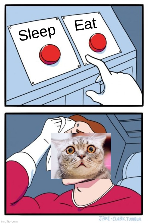 Which button? Comment down below! |  Eat; Sleep | image tagged in memes,two buttons,cat | made w/ Imgflip meme maker