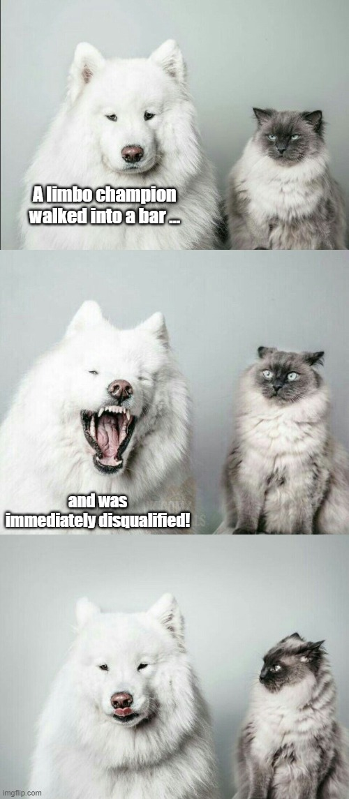 Bad Joke Dog & Cat |  A limbo champion walked into a bar …; and was immediately disqualified! | image tagged in bad joke dog cat,bad jokes,dogs,cats | made w/ Imgflip meme maker