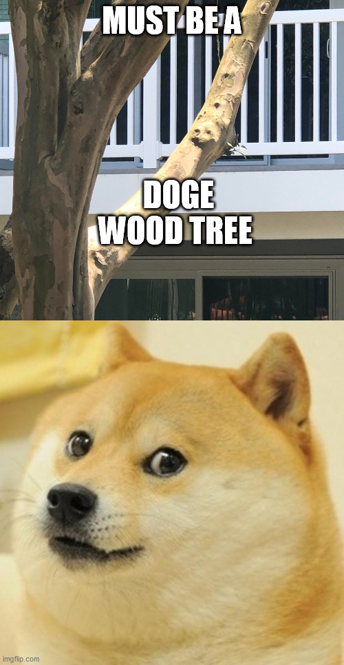 MUST BE A; DOGE WOOD TREE | image tagged in memes,doge | made w/ Imgflip meme maker