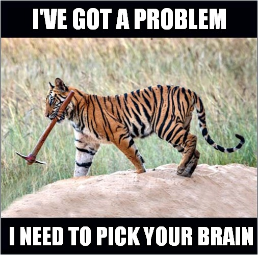 Problem Tiger |  I'VE GOT A PROBLEM; I NEED TO PICK YOUR BRAIN | image tagged in fun,tigers,problem | made w/ Imgflip meme maker