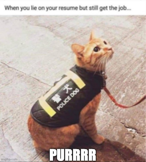 Police Cat | image tagged in cat | made w/ Imgflip meme maker