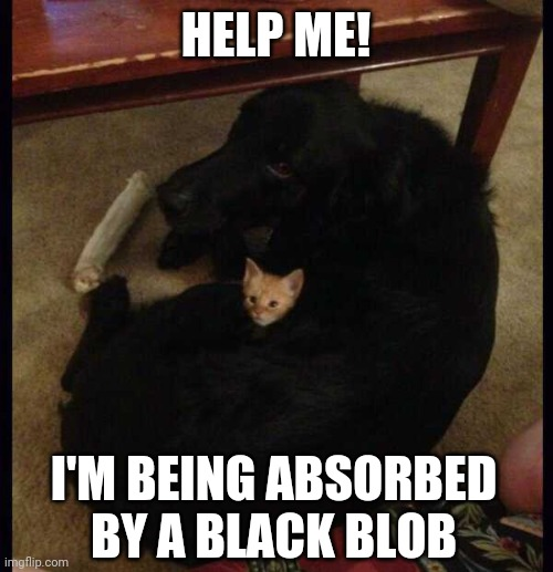 DOGGIE JUST WANTS TO BE FRIENDS |  HELP ME! I'M BEING ABSORBED BY A BLACK BLOB | image tagged in cats,funny cats,dog,kitten | made w/ Imgflip meme maker