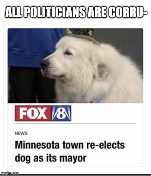 Don't want to start a debate, just thought it was a cool article |  ALL POLITICIANS ARE CORRU- | image tagged in doggo | made w/ Imgflip meme maker